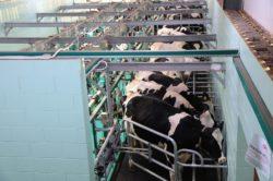 Cena mleka wPolsce