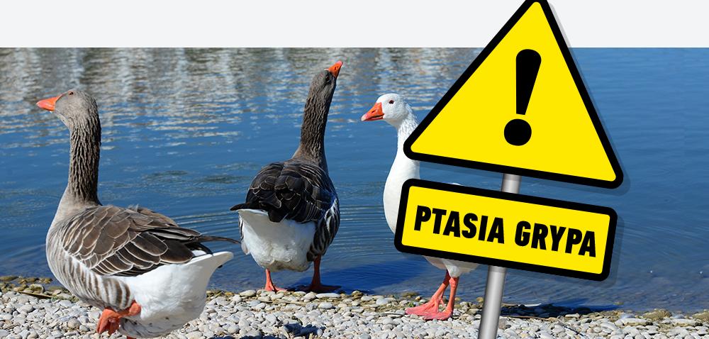 Ptasia grypa – będzie wsparcie dla poszkodowanych [AKTUALNOŚCI]