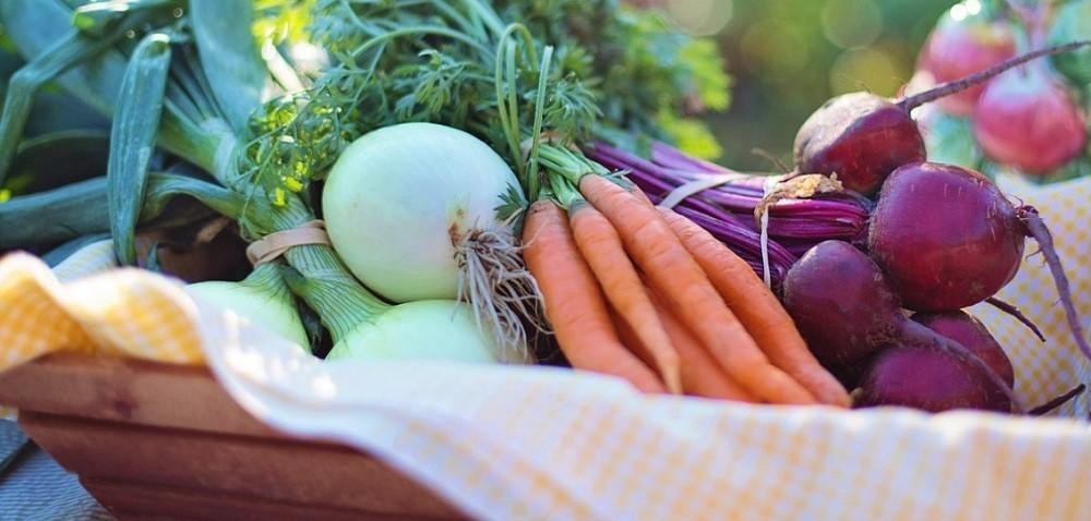 Zbiory warzyw gruntowych – jesienią podobnie jak wzeszłym roku