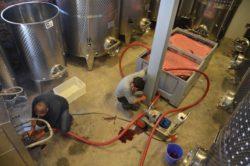 produkcja wina wPolsce