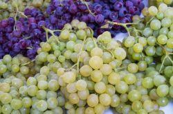 winogrono białe iczerwone