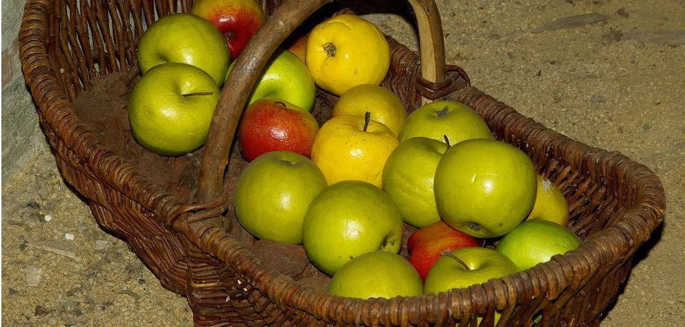Choroby przechowalnicze jabłek – co atakuje owoce po zbiorach?