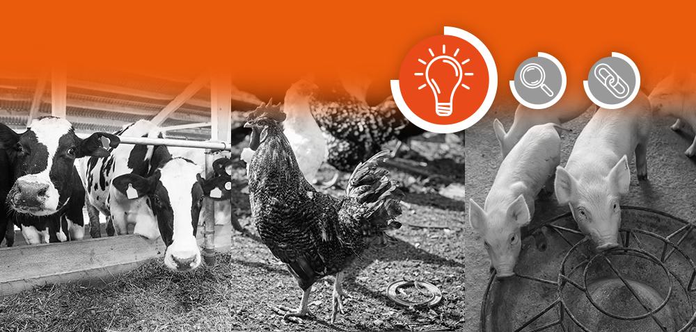 Dobrostan zwierząt gospodarskich – jak go wspierać poprzez żywienie?