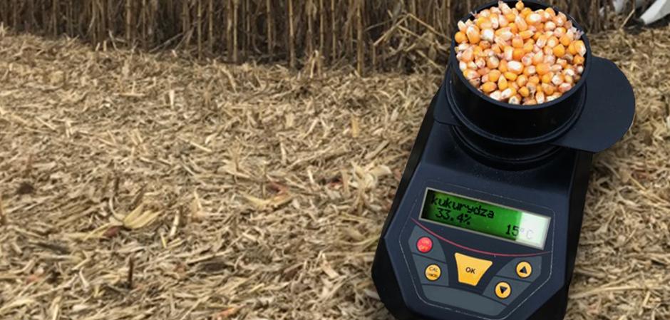 Wilgotność kukurydzy nadal wysoka