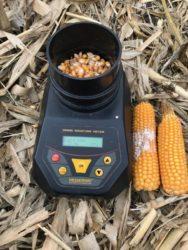 wilgotność kukurydzy