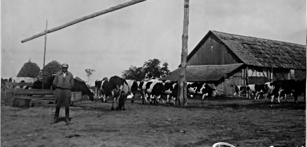 Pamiętnik Rolnika – historia mojego gospodarstwa