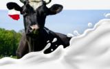 Rynek mleka w Polsce