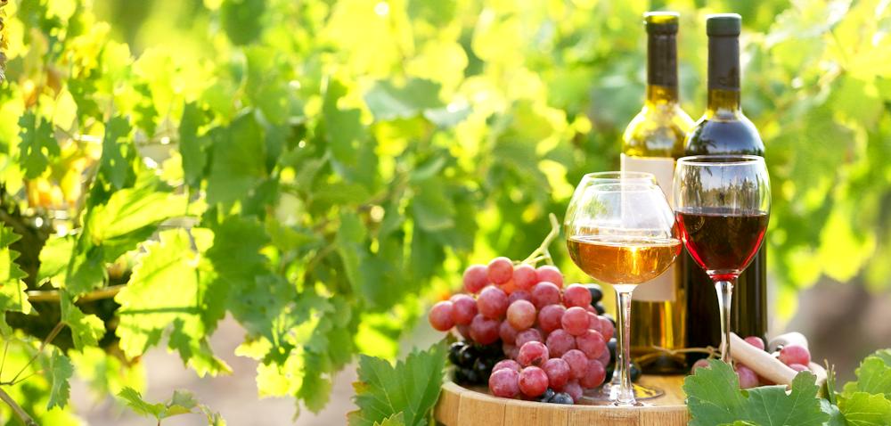 Produkcja wina gronowego – dodatkowy dochód wgospodarstwie