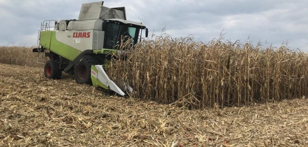 Zbiory kukurydzy opóźnione na Dolnym Śląsku