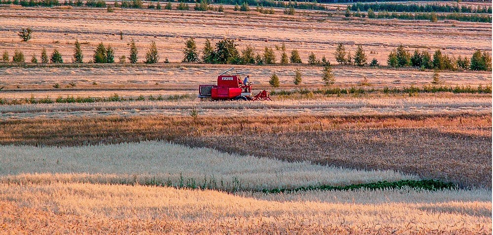 Zbiory zbóż – wyższe plony, niższa jakość ziarna