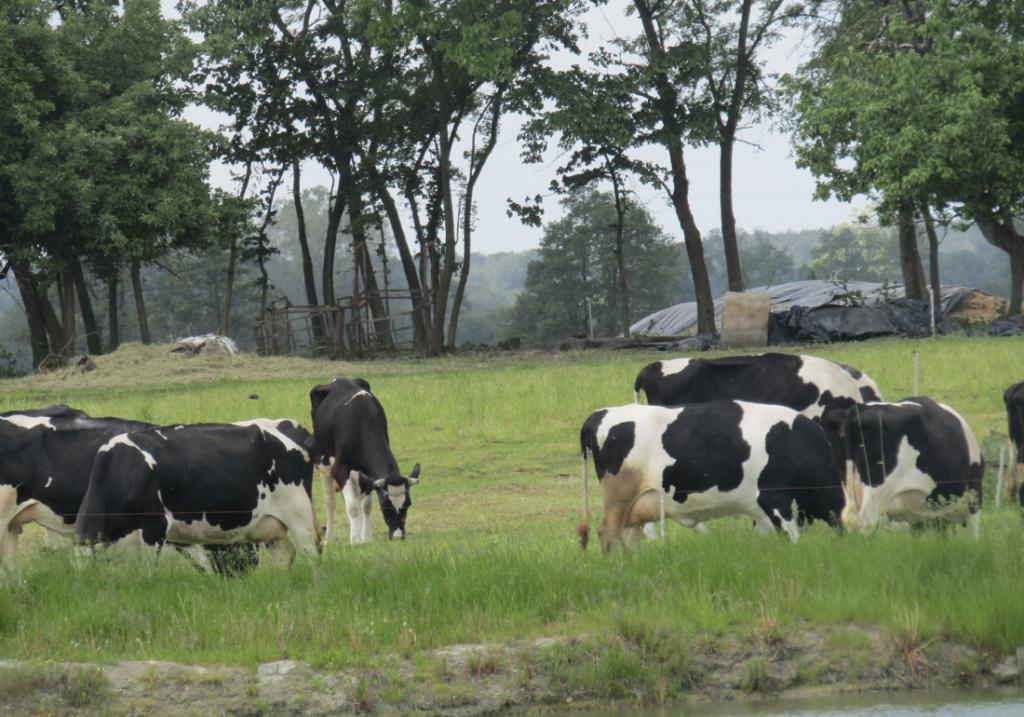 Z miasta na wieś - czasami hodowla jest mało opłacalna