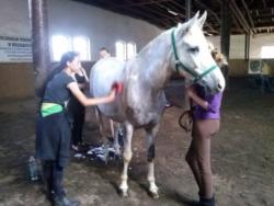 Przyszli hodowcy koni przy pracy