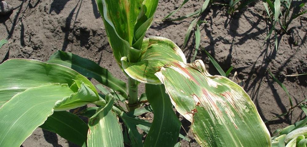 Mieszanie herbicydów – na które formulacje trzeba uważać?
