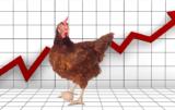 Rynek drobiu i jaj