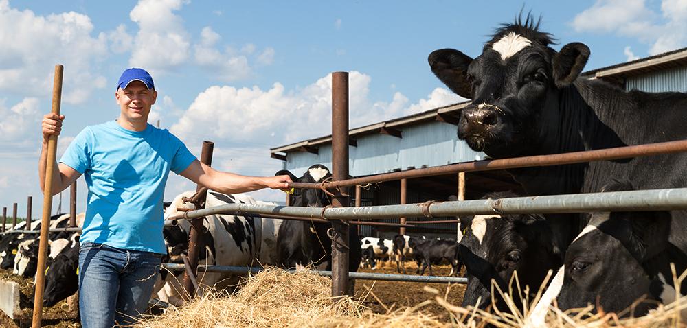 Pomoc dla producentów mięsa – jak zdobyć wsparcie?