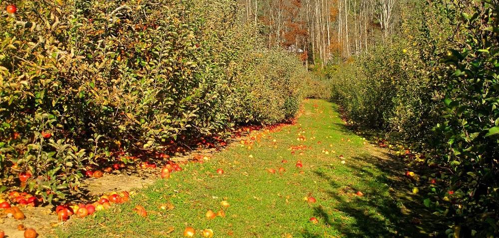 Wapnowanie gleby wsadzie – późna jesień to optymalny termin