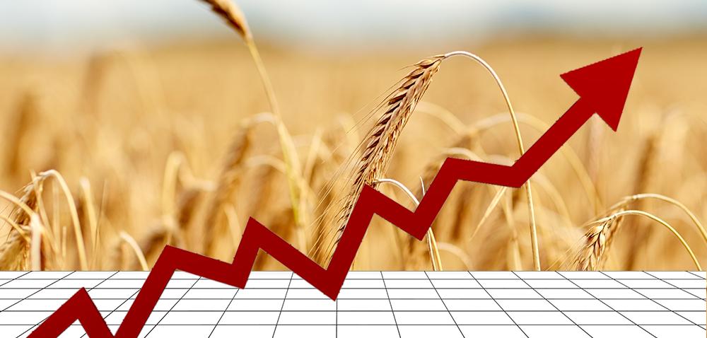 Rynek zbóż wPolsce – jakie prognozy na 2018 rok?