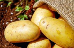 ceny ziemniaków wUE