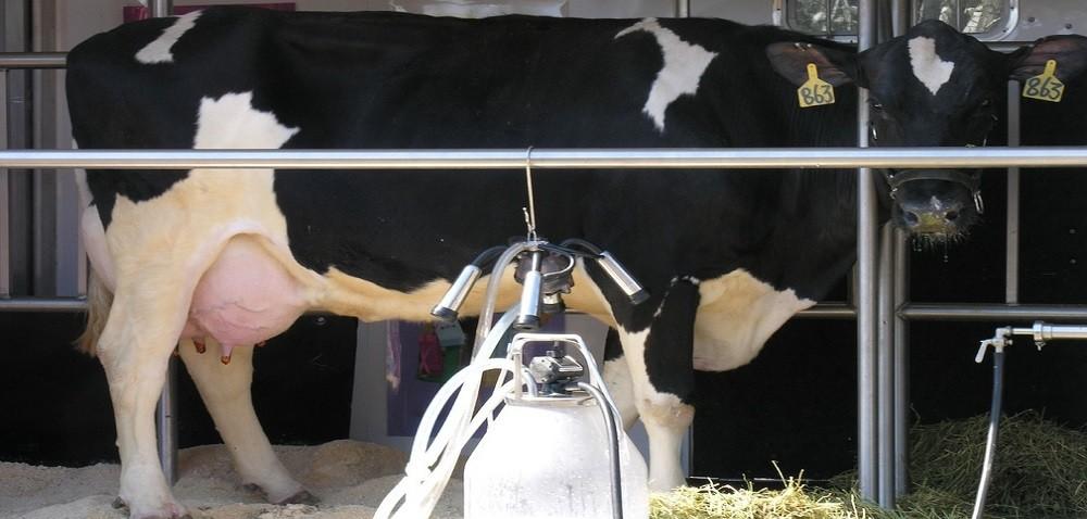Ciekawostki rolnicze w100 sekund – m.in. koszty produkcji mleka
