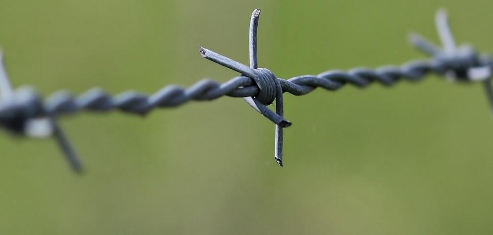 Walka zASF – będzie zapora na granicy wschodniej