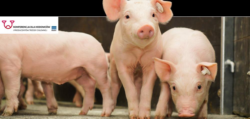 Konferencja Blattin dla producentów trzody wTwoim regionie – zapisz się już dziś!