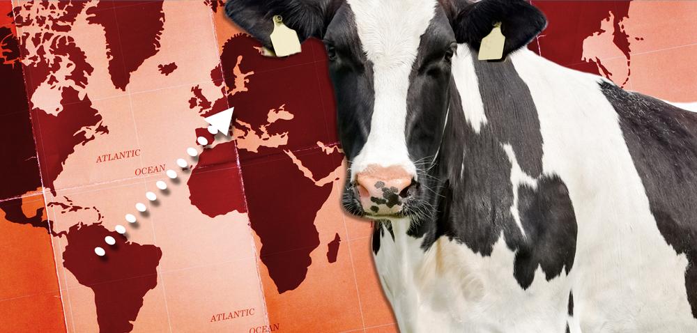 Rynek wołowiny wUE aimport zAmeryki Południowej