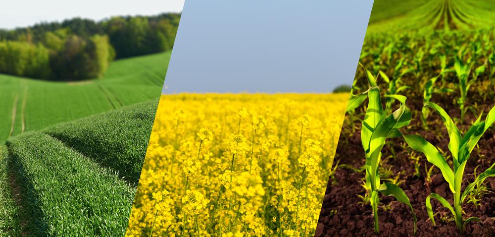 Nawożenie roślin uprawnych – jakich nawozów używać?