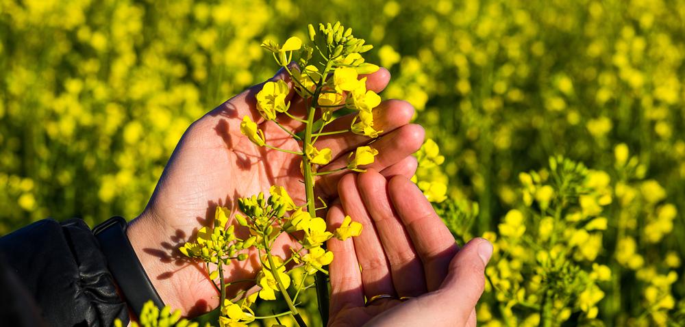Biopreparaty wochronie roślin – dlaczego warto ich używać?