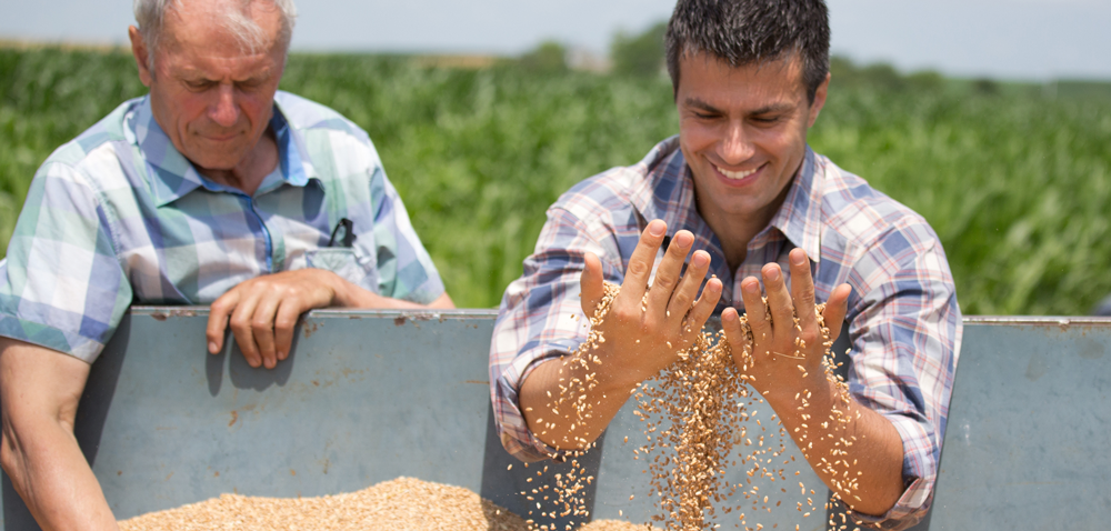 Obrót płodami rolnymi – jak to robić sprawnie ibezpiecznie?