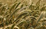 ceny skupu produktów rolnych