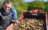 cena ziemniaków