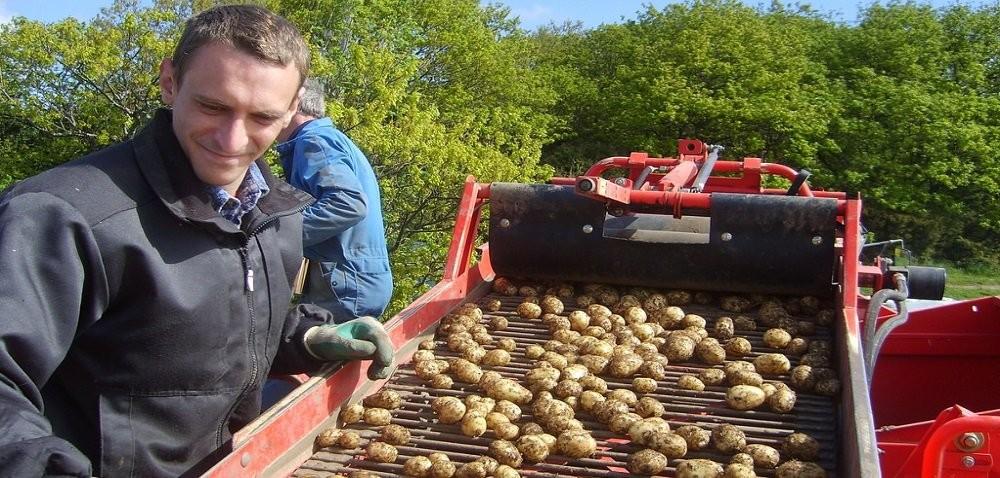 Cena ziemniaków – co zrobić, żeby uzyskać większe dochody ze sprzedaży?