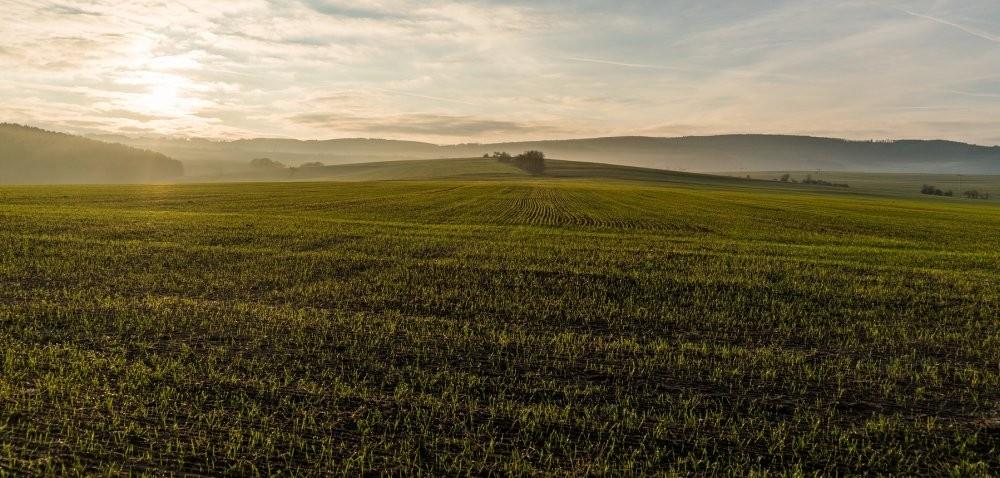 Uodpornienie na herbicydy: jak nad nim zapanować?