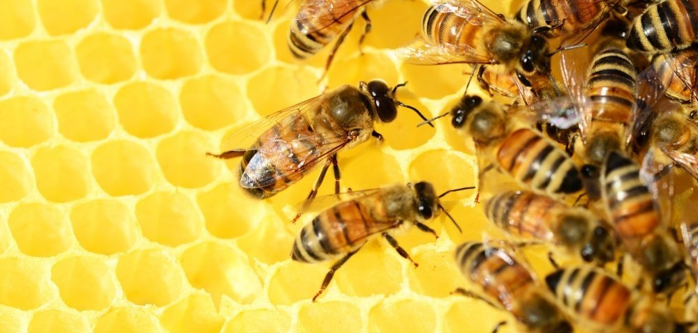 Dofinansowanie dla pszczelarzy – pieniądze czekają!