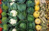produkcja ziemniaków i warzyw