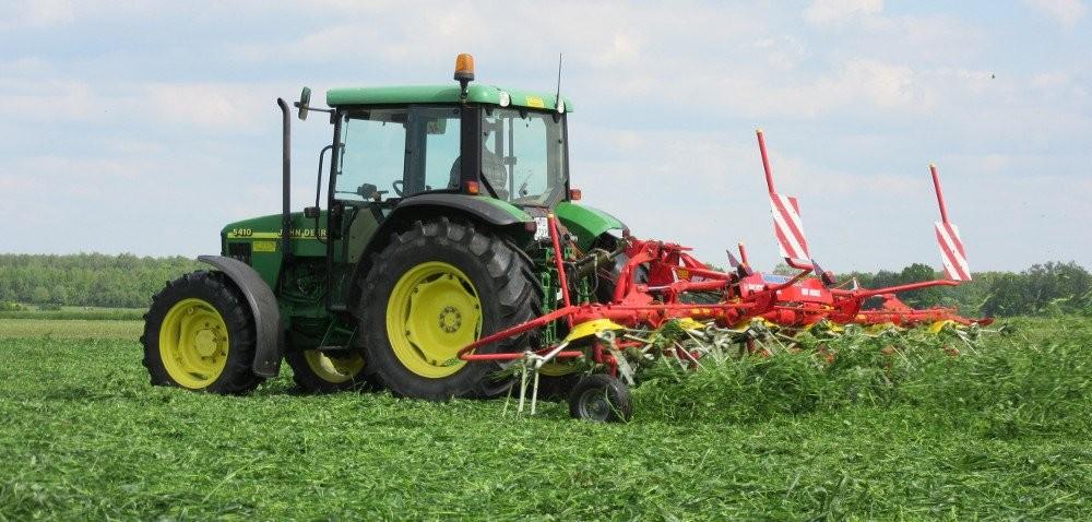 Mieszanka traw na gleby suche: energia na start