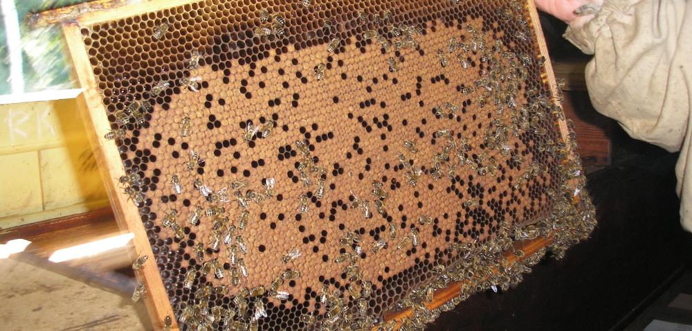 Dofinansowanie pszczelarstwa 2018 – dodatkowy dochód!