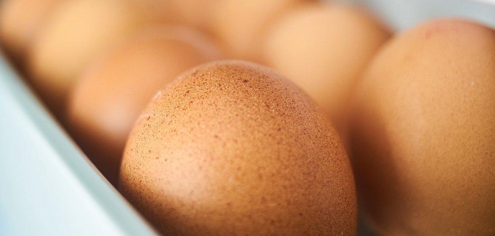 System klatkowy chowu kur – co dalej?