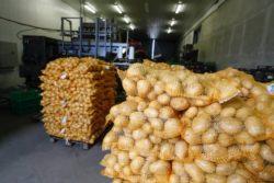 produkcja warzyw
