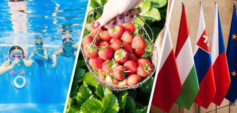Nowy pomysł plantatorów na truskawki! [Aktualności]