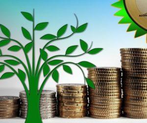 Pieniądze na istniejący las. Zaplanuj inwestycję