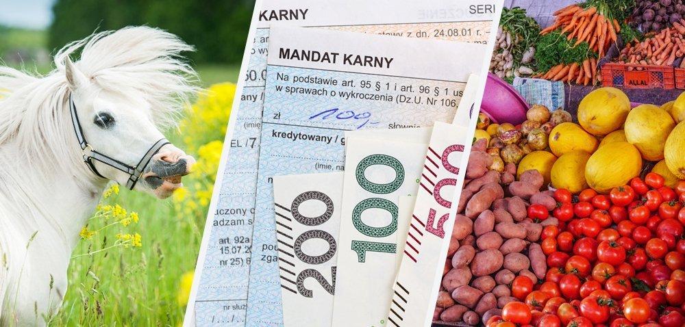 Mandaty dla protestujących rolników! [Aktualności]
