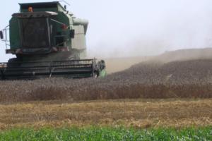 Kalkulacja uprawy pszenżyta. Jeśli umiesz liczyć, licz na…