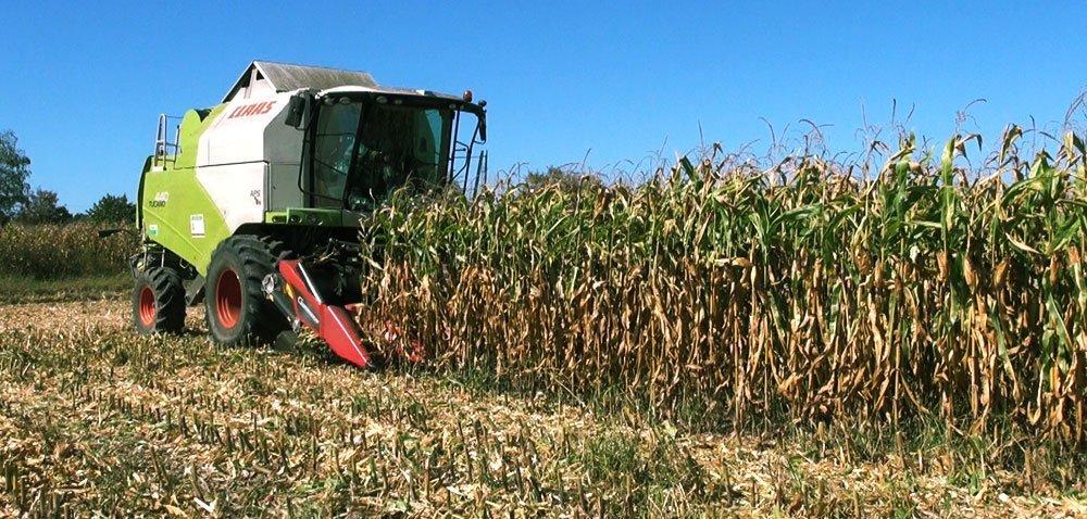 Żniwa kukurydzy 2018. Jak rolnicy oceniają plonowanie?