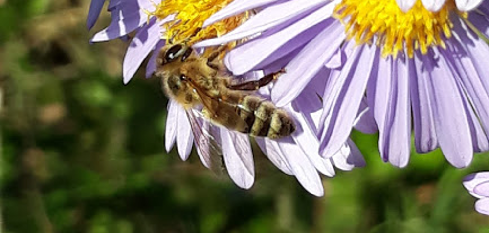 Produkty pszczele, na których da się zarobić konkretne pieniądze