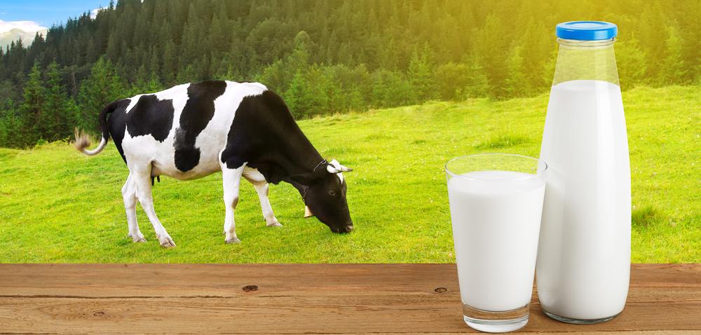 Rynek mleka. Czy uda się zażegnać kryzys?