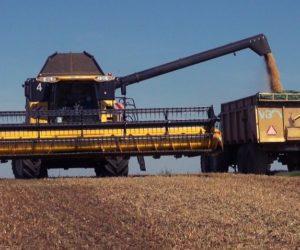 Uprawa iżniwa soi oraz jej wpływ na glebę