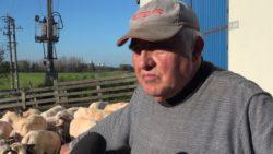 Jan Spik hodowca owiec zOpola