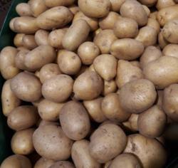 kalkulacja kosztów uprawy ziemniaka