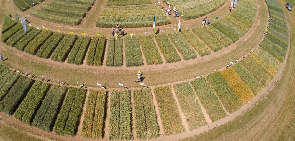 Kalkulacja kosztów uprawy owsa wg ODR